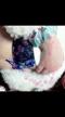 「動画」02/25(日) 01:23 | みゆの写メ・風俗動画
