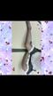 「❤︎戻ってきて2日目❤︎」02/28(水) 22:22 | 綺麗で大人☆かなの写メ・風俗動画