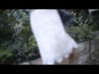 「衝撃が走る端正なお顔立ちに華奢で女性らしい身体」04/03(04/03) 17:00   愛真(えま)の写メ・風俗動画