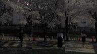 「本日さくらまつりイベント」04/25(水) 02:51 | 1919マンの写メ・風俗動画