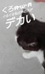 「お疲れ様です⸜(*ˊᗜˋ*)⸝」08/27(月) 12:38   るいの写メ・風俗動画