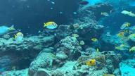 「美ら海水族館」03/09(土) 22:08 | ゆら【四皇】の写メ・風俗動画