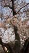 「こんばんは」04/06(月) 19:20 | 小川彩香の写メ・風俗動画