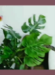 「Iカップ爆乳美女【まりちゃん】」07/07日(火) 20:45   まりの写メ・風俗動画