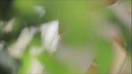 「スレンダー美形マダム」10/27(火) 21:08 | 高森来夢の写メ・風俗動画