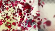 「綺麗なお姉さんと恋に落ちてみてください♪」11/26日(木) 18:23 | みなみ 超美女の写メ・風俗動画