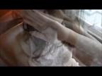 「透き通るような白い肌に、スラッと伸びた美脚...」11/11(11/11) 18:39   凛(りん)の写メ・風俗動画